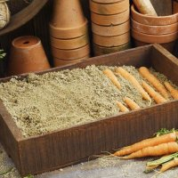 Как хранить морковь в погребе: гид по способам и частые ошибки новичков