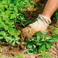 Cредства от сорняков: как выбрать гербицид домашние рецепты «на скорую руку»