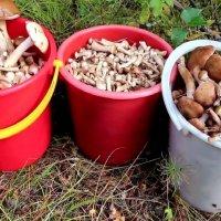 Нужно ли отваривать грибы перед жаркой?