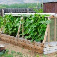 Лучшие конструкции теплиц для выращивания огурцов: проверенные временем варианты