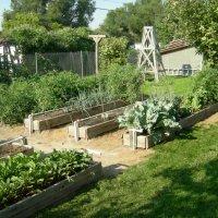 Как обустроить огород по Митлайдеру и вырастить по-настоящему богатырские овощи
