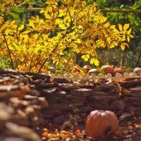 Залог будущего урожая: чем удобрить землю осенью, если нет навоза