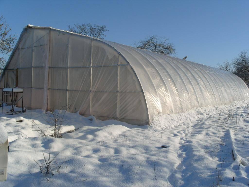 Зимняя теплица своими руками: лучшие советы от мастеровитых дачников