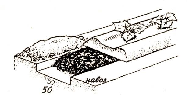 как приготовить маточный раствор для рассады огурца как приготовить еду из засушенных грибов конспект итогового...