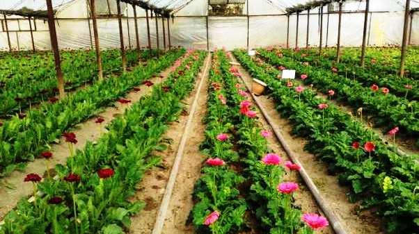 выращивание цветов круглый год в открытом грунте модели термобелья