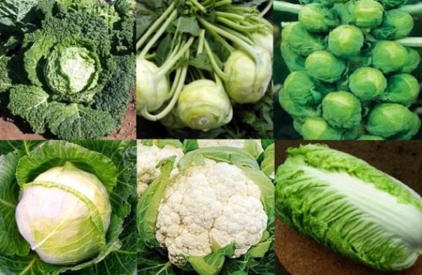 Выращивание капусты в теплице: хотите ...: vasha-teplitsa.ru/virashivanie/vyrashhivanie-kapusty-v-teplice.html