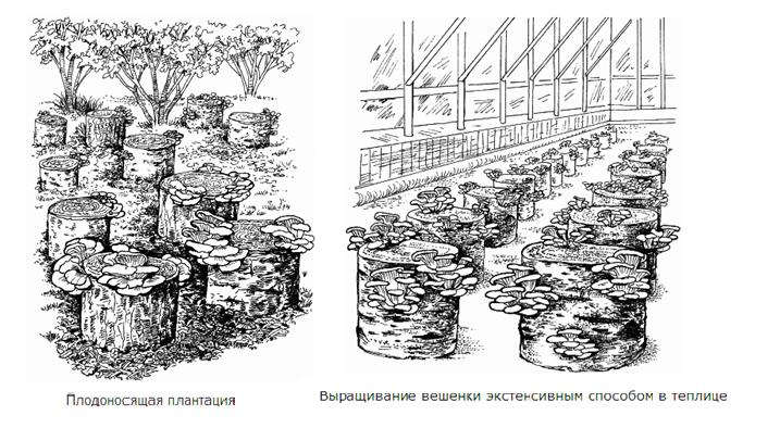 Теплица своими руками для выращивания грибов
