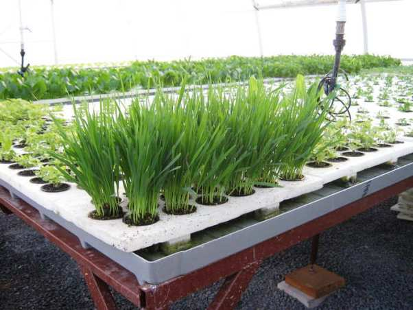 очень Выгодно ли выращигть дома зелень проницательно