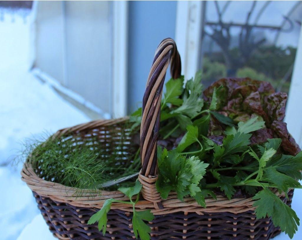 Зелень в теплице: обзор классических и нестандартных способов выращивания