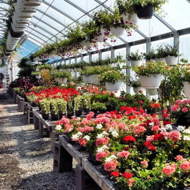 Как выращивать цветы в теплице на продажу – бизнес-план и советы