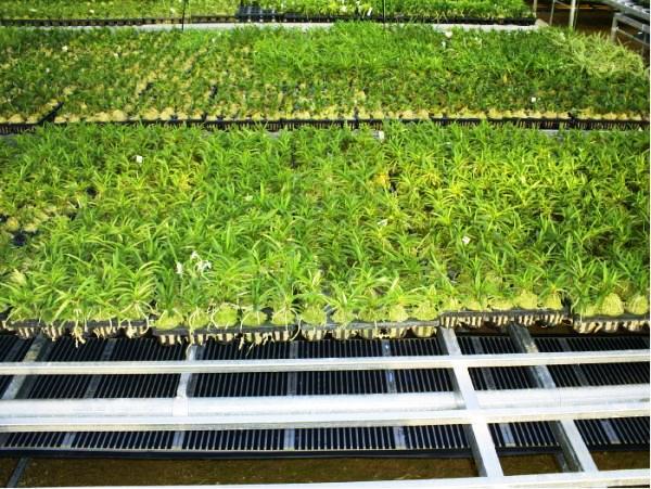 ТЕПЛЫЕ ПОЛЫ!Инфракрасная пленка(на пол, потолок и стены) Плёночные тёплые полы-альтернативное отопление будущего.