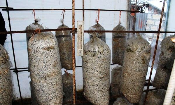 Картинки по запросу Выращивание грибов.