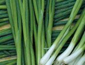 Как вырастить лук на зелень в теплице