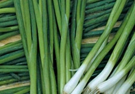 Как выращивать лук на зелень круглый год?