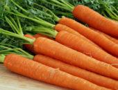 Как вырастить раннюю морковь в теплице
