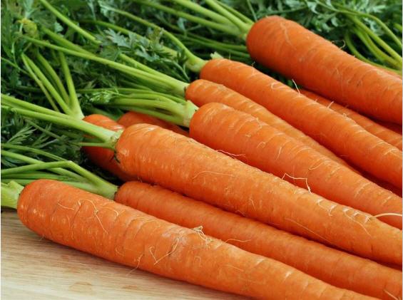 Как быстро и правильно вырастить раннюю морковь в теплице?