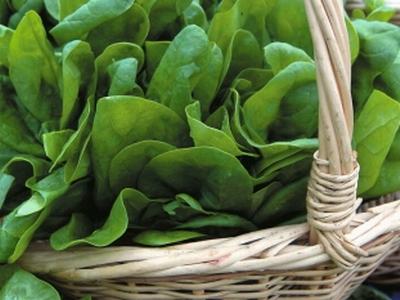 Какие сорта шпината лучше всего выращивать в закрытом грунте?