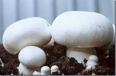 Приготовление компоста для шампиньонов и условия их выращивания