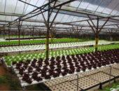 Выращивание растений на гидропонных установках