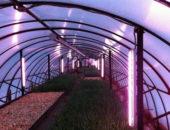 Люминесцентные лампы в теплице