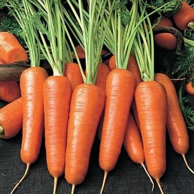 Выращивание моркови в зимней теплице - высокие вкусовые качества корнеплодов