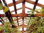 Оптимальное расстояние между стропилами крыши теплицы