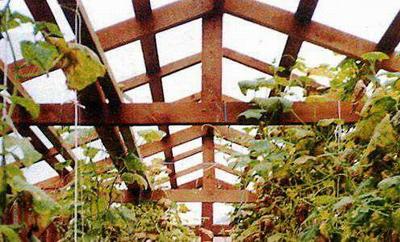 Какое расстояние между стропилами крыши теплицы должно быть при толщине поликарбоната 4 мм и 6 мм?