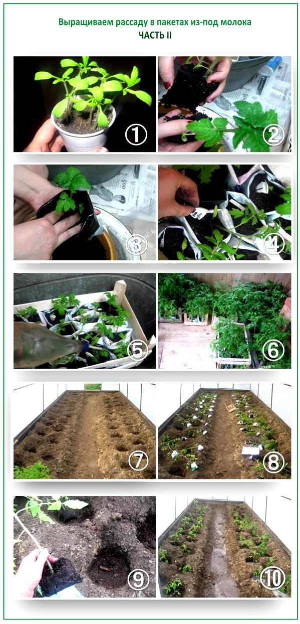 Как вырастить рассаду своими руками
