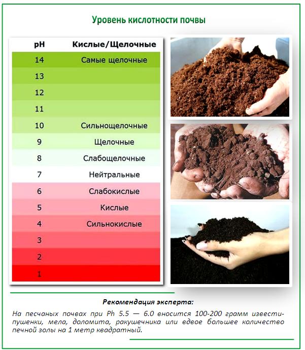Как сделать из щелочной почвы кислую
