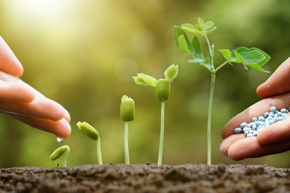 Виды удобрений для почвы: классификация и подробное описание каждого типа