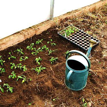 Общие правила посадки и выращивания рассады для последующей высадки в грунт