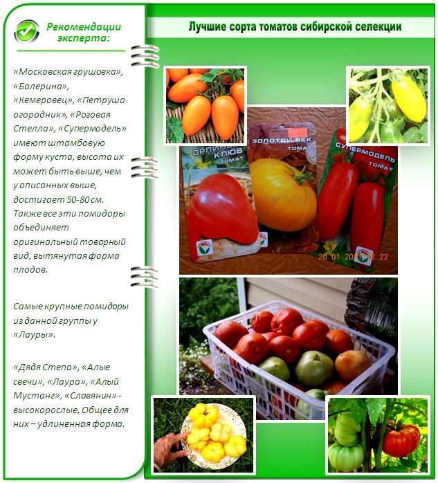 Лучшие сорта сибирской селекции