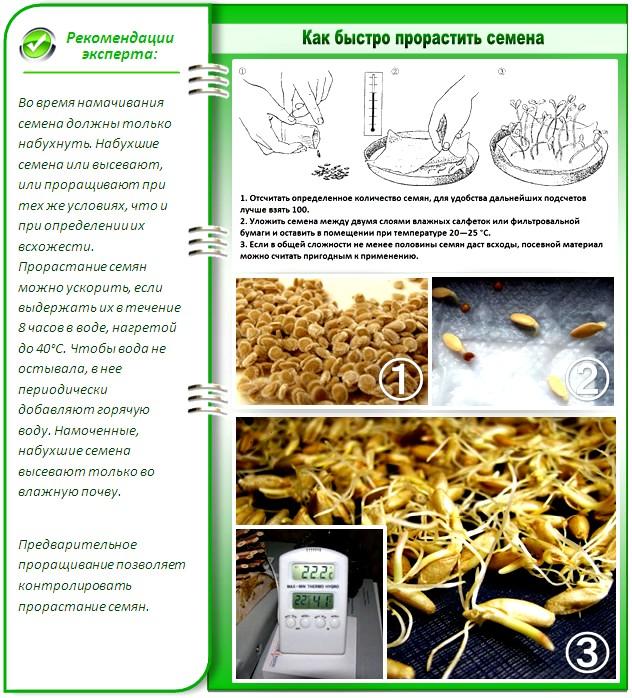Способы подготовки семян к посеву