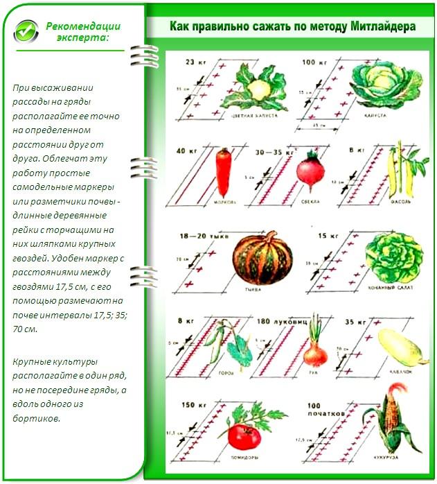 Технология выращивания по Митлайдеру