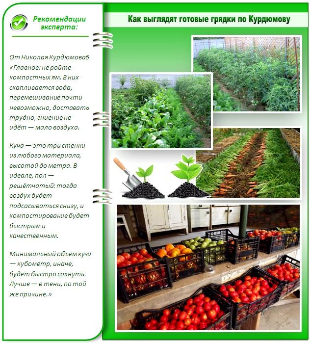 Урожай с грядок Курдюмова
