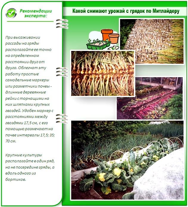 Урожай с узких грядок