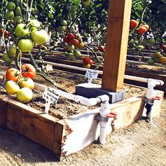 Метод узких грядок: раскрываем секреты высокой урожайности