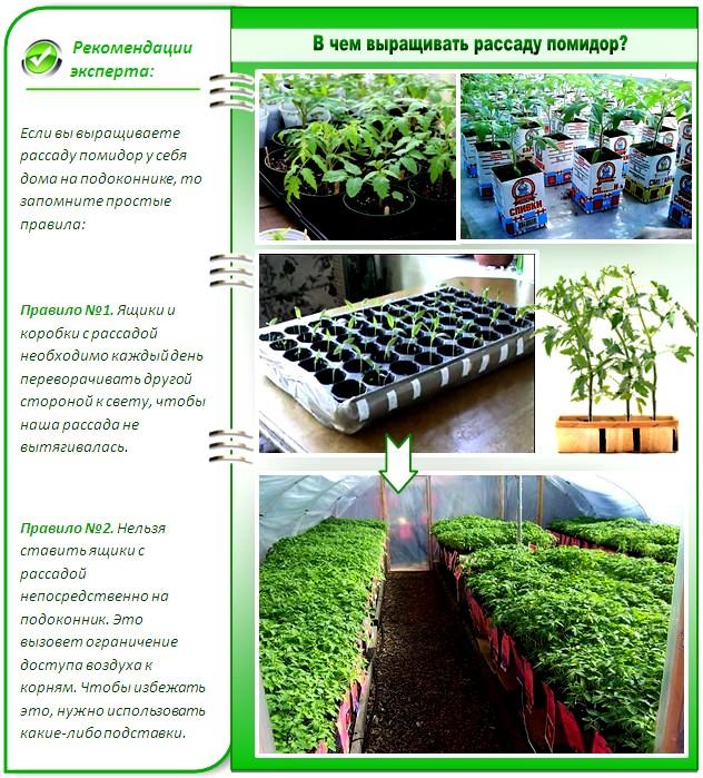 Как посадить рассады помидорами 301
