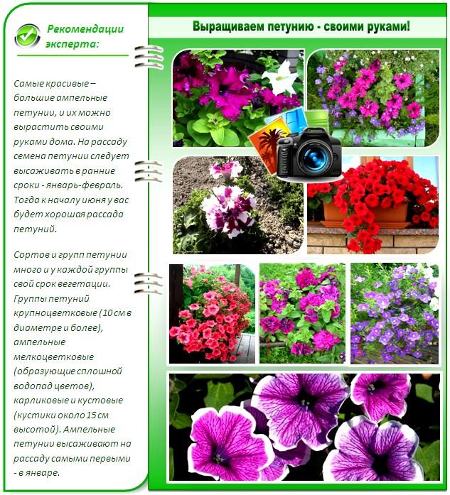 Цветы которые сажать в грунт 63