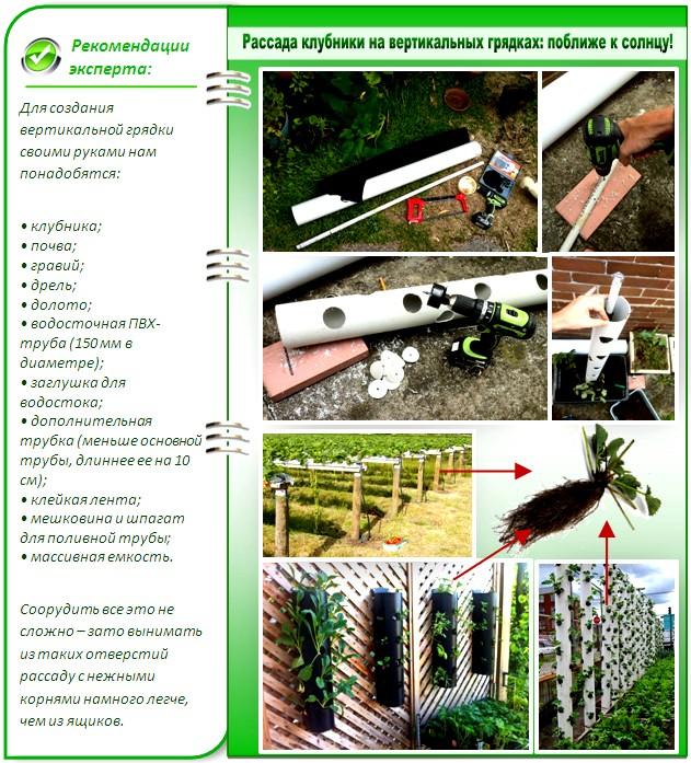 Помидоры. Выращивание томатов. Сорта и рассада, теплица и огород 71