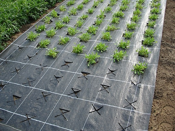 Как выбрать хороший укрывной материал от сорняков, разбор технологии его монтажа