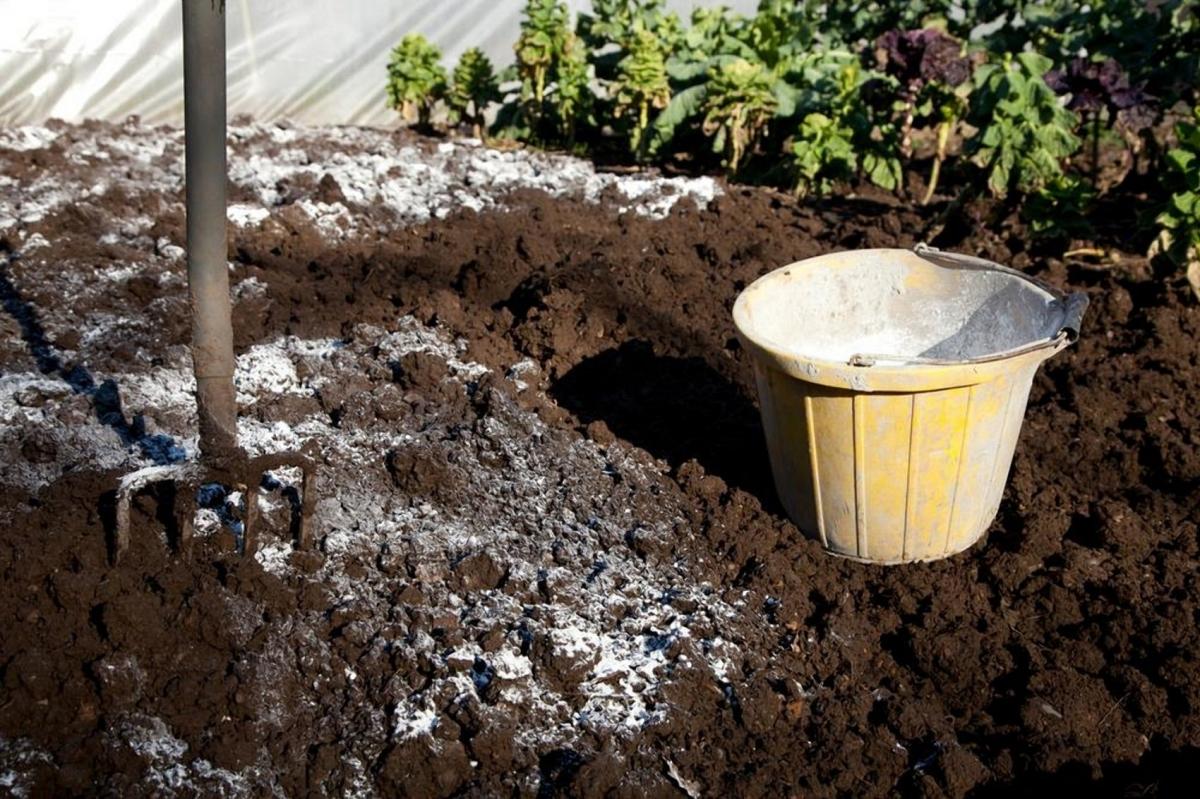 Известкование почвы: как правильно регулировать кислотность грунта
