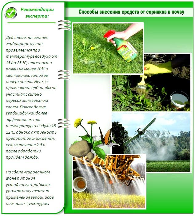 Как распыляют средства от сорняков