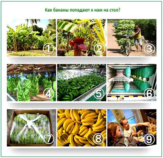 Обработка бананов