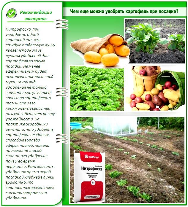 Какое удобрение выбрать для картофеля