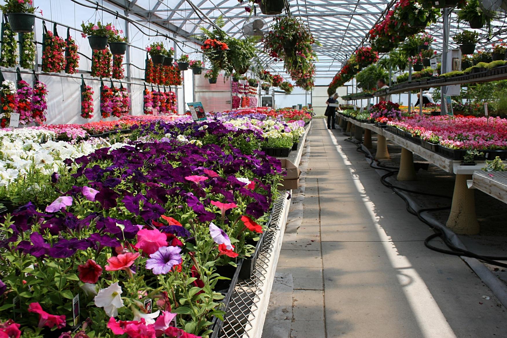 Какой должна быть идеальная теплица для цветов: все про выращивание цветов в теплице