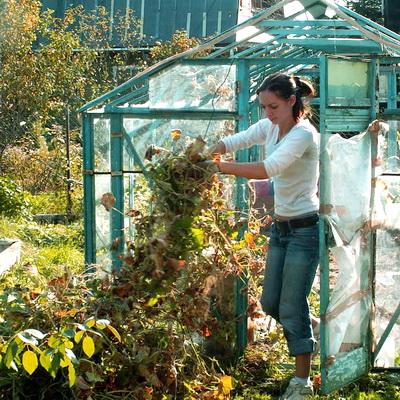 Осенние работы в теплице: как обработать и подготовить к зиме