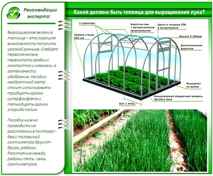 Для выращивания лука в теплице