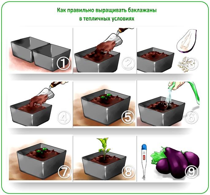 Тонкости выращивания пассады