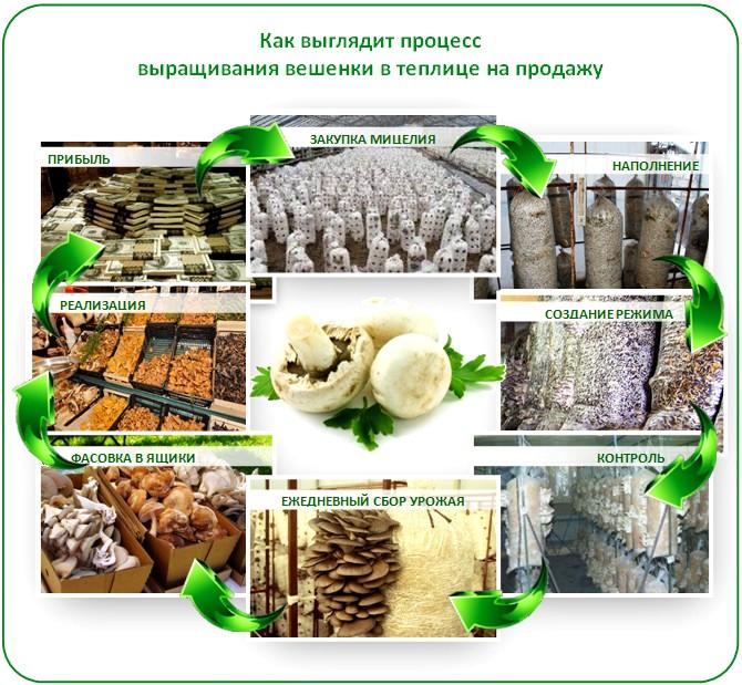 Бизнес на грибах в теплице